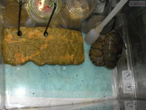 カブトニオイガメのフォトンとミラージュ